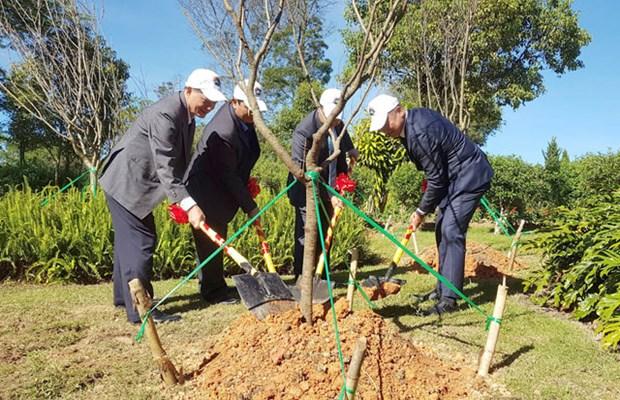 Plantation de 125 cerisiers japonais a Da Lat hinh anh 1