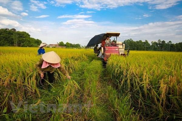 L'agriculture vise 21 milliards de dollars d'exportation hinh anh 1