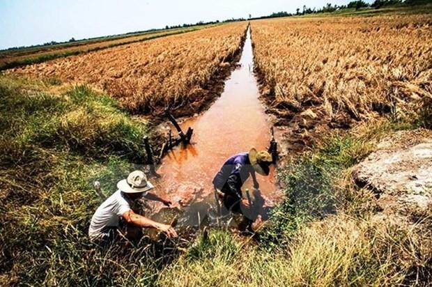 La salinisation menace le delta du Mekong hinh anh 1