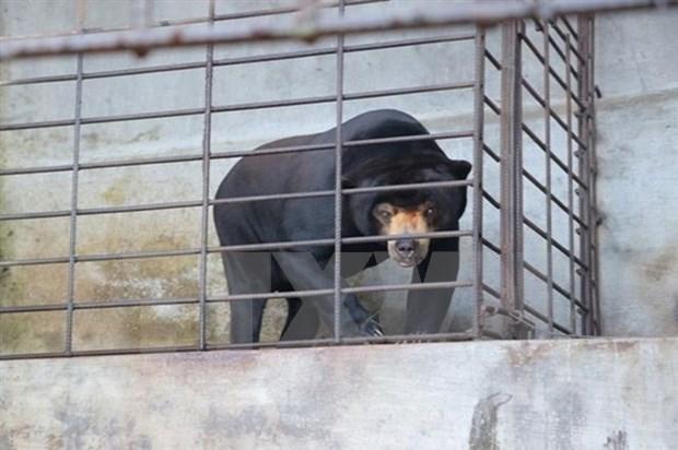 521 animaux en danger sauves en 2018 hinh anh 1