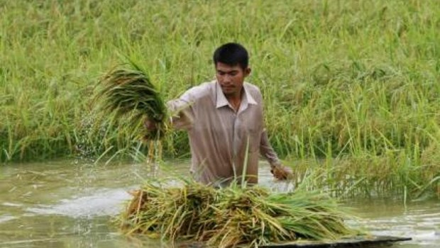 Le PM cambodgien appelle a une diversification du marche a l'export du riz hinh anh 1