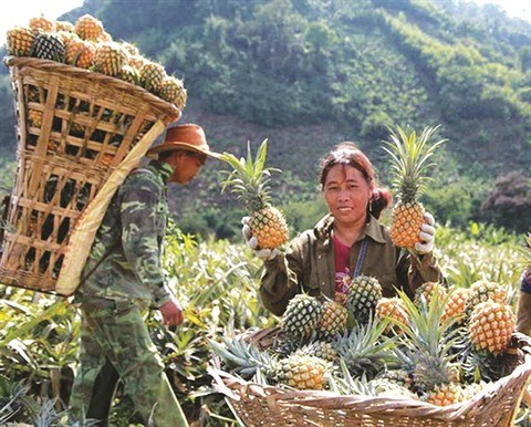 Lao Cai: la vitalite d'une region frontaliere hinh anh 2