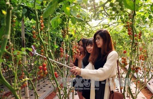 Le seminaire sur la promotion du commerce dans la province de Lam Dong en R. de Coree hinh anh 2