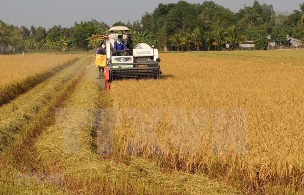 Le secteur agricole en penurie d'environ 3,2 millions de travailleurs qualifies en 2020 hinh anh 1
