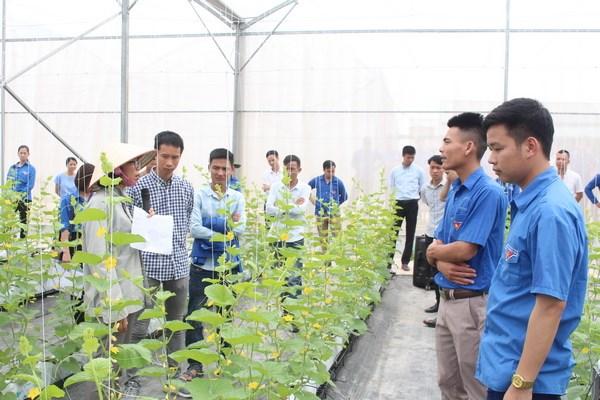 Bac Giang: transfert de techniques de production agricole high-tech aux jeunes locaux hinh anh 1