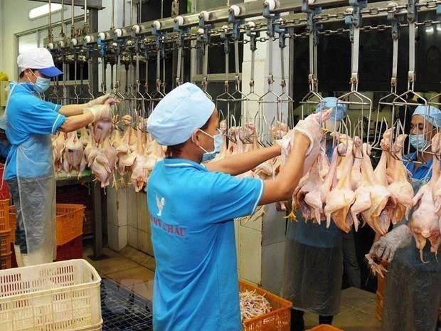 La compagnie par actions d'elevage CP Vietnam exportera des volailles hinh anh 1