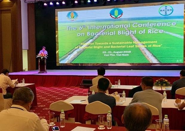Riz : une conference internationale sur la maladie bacterienne des feuilles a Can Tho hinh anh 1