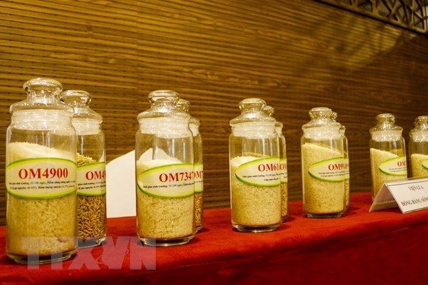 Les entreprises de Hong Kong cherchent a importer du riz de Can Tho hinh anh 1
