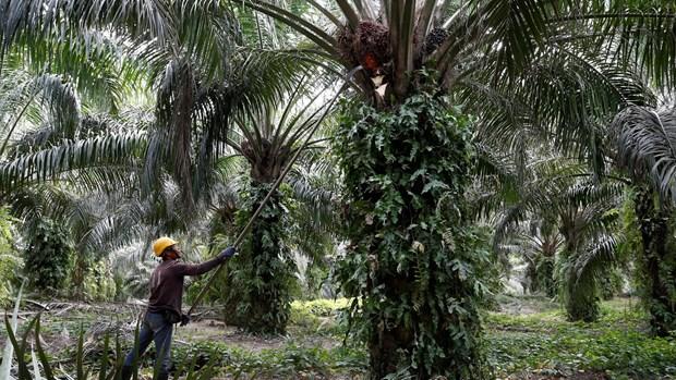 La Malaisie et l'Inde vont travailler a l'amelioration de leurs relations hinh anh 1