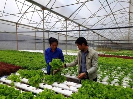 Resilience au changement climatique : plus de 80 milliards de dongs pour soutenir des agriculteurs hinh anh 1