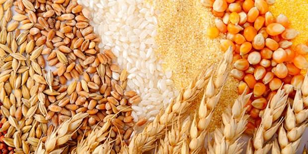 Le Cambodge pourra exporter 5 millions de tonnes de produits agricoles cette annee hinh anh 1