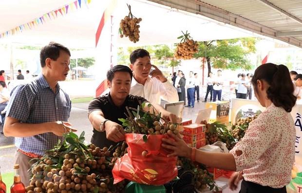 Plus de 70 entreprises et importateurs consomment des longanes vietnamiennes hinh anh 2
