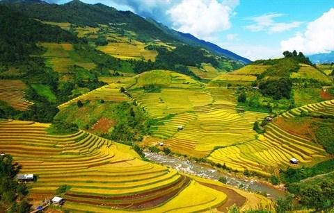 Multiples activites pour la relance du tourisme hinh anh 1