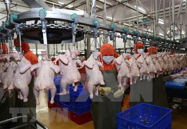La viande de poulet du Vietnam bientot exportee a Singapour et Hongkong (Chine) hinh anh 1