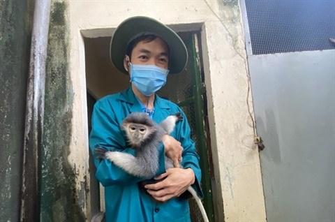 A Thao Cam Vien, les animaux sont aides pour surmonter la crise du COVID-19 hinh anh 2