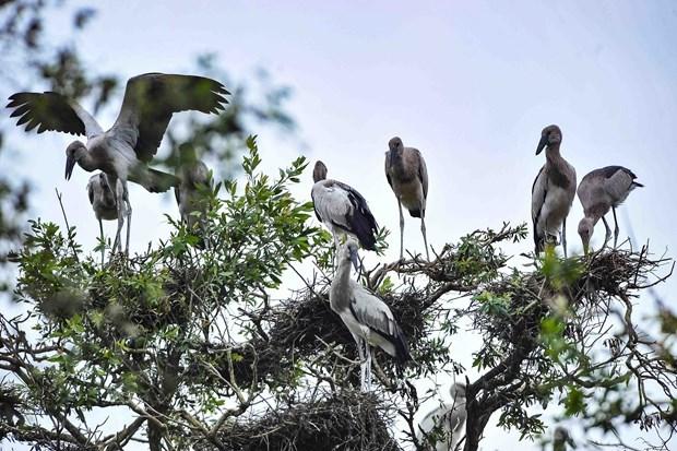 Proposition de creer un reseau des Sites Ramsar du Vietnam hinh anh 1