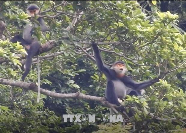 Harmonie entre les moyens d'existence humains et les habitats d'animaux rares hinh anh 1