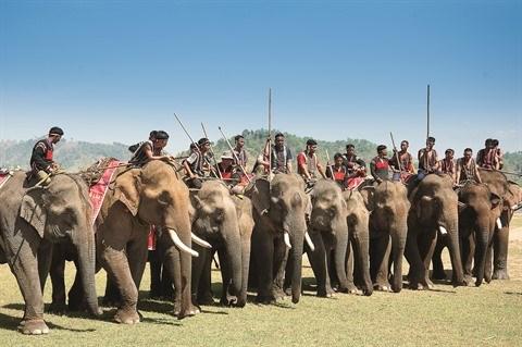 Mes souvenirs du Festival des elephants hinh anh 1