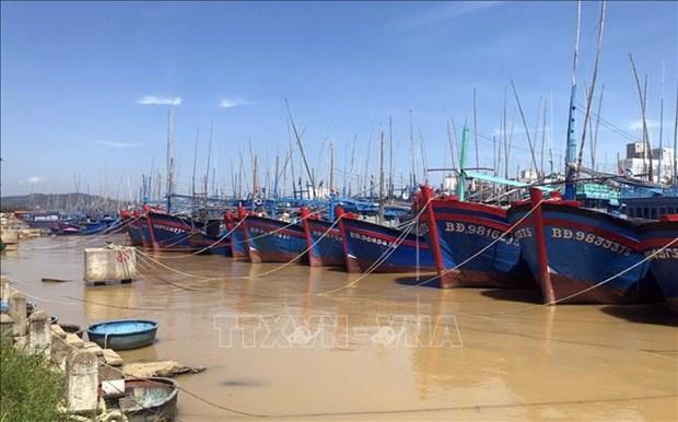 100% des navires de peche a Binh Dinh devront avoir un certificat de securite alimentaire en juin hinh anh 1