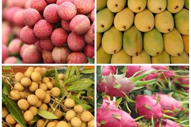 Vietnam y Argentina fortalecen cooperación en comercio agrícola hinh anh 1