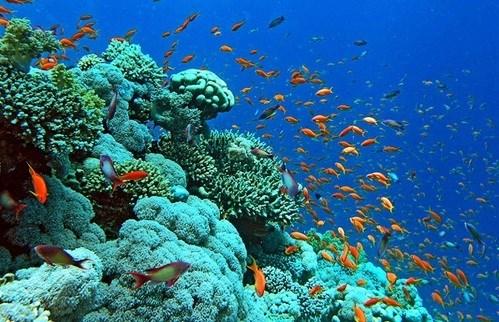 Proteger les ecosystemes des recifs coralliens dans la baie d'Ha Long hinh anh 1