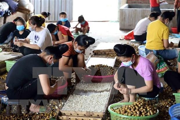 ASEAN : promotion du role des femmes dans l'agriculture hinh anh 1