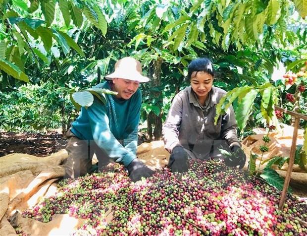 Connexion de la consommation et de l'exportation des produits agricoles vers l'Algerie et le Senegal hinh anh 1