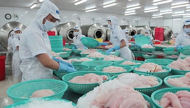 L'UE, toujours un debouche tres important pour les pangasius du Vietnam hinh anh 1