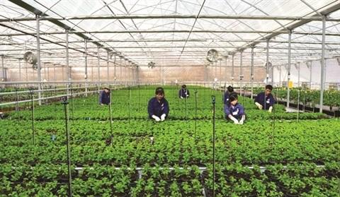 Da Nang tente de moderniser son agriculture hinh anh 1