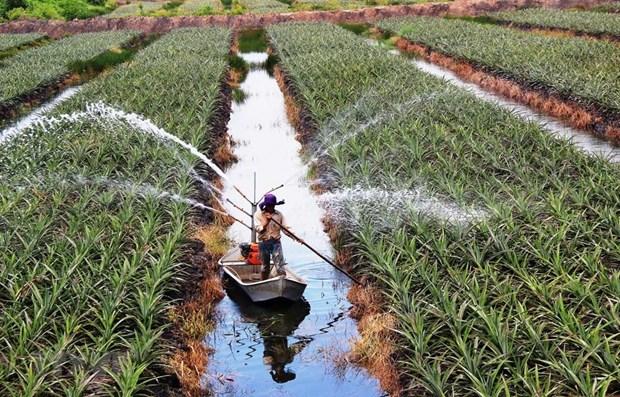Attraction de l'investissement dans l'agriculture : une force pour le developpement hinh anh 1