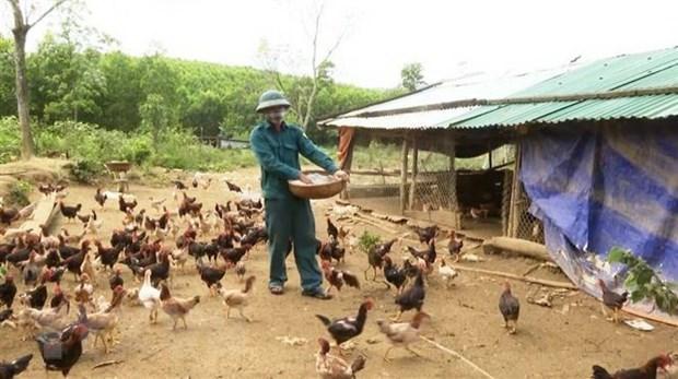 Thanh Hoa declare la fin de la grippe aviaire A/H5N6 hinh anh 1