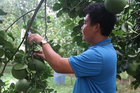 Des opportunites a saisir pour les exportateurs de fruits hinh anh 1