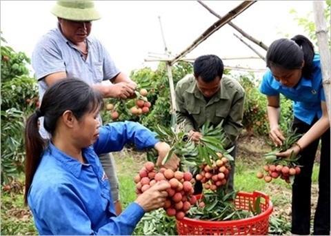 Des opportunites a saisir pour les exportateurs de fruits hinh anh 2