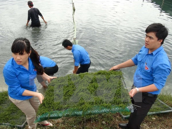 Da Nang-Saravane renforcent la cooperation entre les jeunes hinh anh 1
