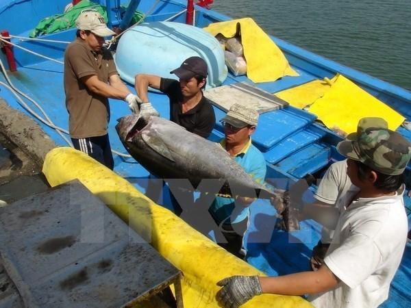 L'entreprise japonaise Hokugan s'interesse au traitement du thon au Vietnam hinh anh 1