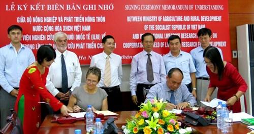Le Vietnam et l'Institut international de recherche sur l'elevage cooperent dans l'elevage hinh anh 1