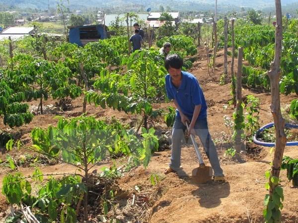 Tay Nguyen : 53 localites satisfont aux criteres de la Nouvelle ruralite hinh anh 1