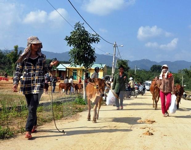 Cooperation entre des districts de Quang Nam et de Sekong (Laos) hinh anh 1