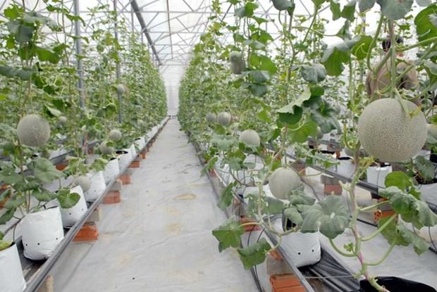 Cuba et Ho Chi Minh-Ville partagent les experiences de developpement agricole hinh anh 1