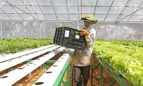 Supermarche : porte grande ouverte sur les produits agricoles des localites hinh anh 2