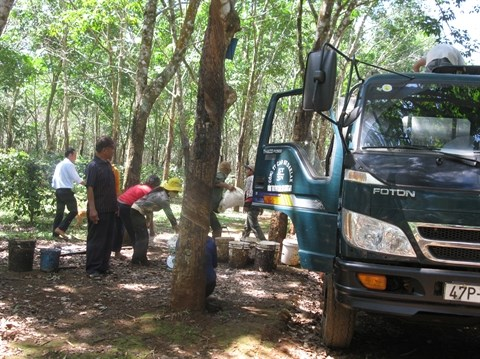 Edification de la Nouvelle ruralite chez les Ede de Dak Lak hinh anh 2