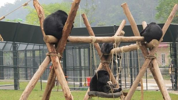 2020 : mettre fin a l'utilisation de la bile d'ours dans la medecine traditionnelle hinh anh 1