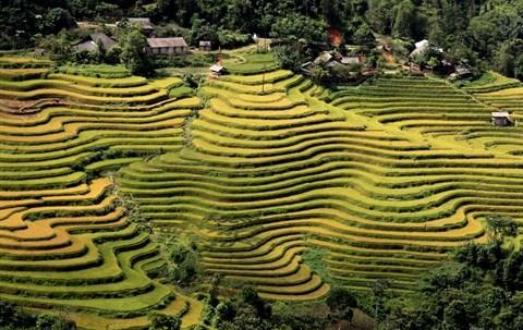Ouverture de la Semaine culturelle et touristique des rizieres en terrasses de Hoang Su Phi hinh anh 1