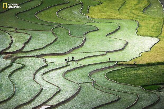 Une photo sur les rizieres en terrasses dans le top 10 d'un concours international hinh anh 1