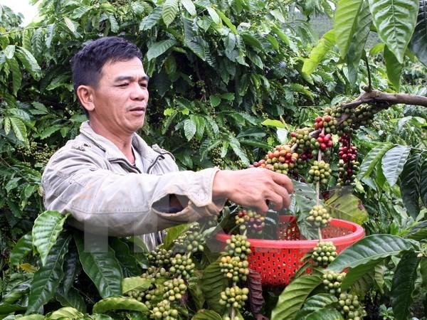 Baisse des exportations de produits agricoles, sylvicoles et aquatiques hinh anh 1