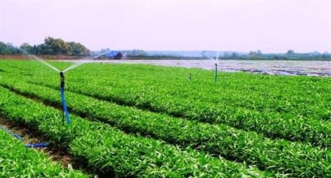 Vingroup : le premier lot de legumes bio mis en vente hinh anh 1