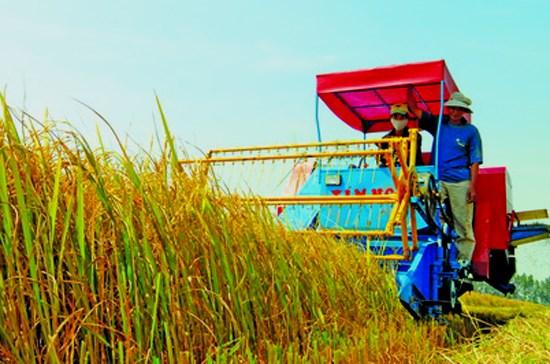 Directive du PM sur le projet de restructuration de l'agriculture hinh anh 1