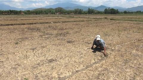 Secheresse redoutee dans le Nord et le Tay Nguyen en raison d'El Nino hinh anh 1