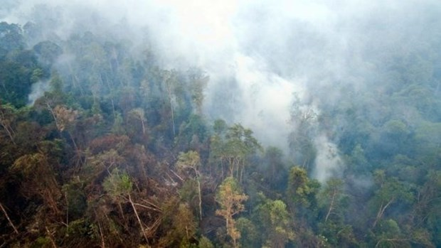 Fumees acres : la Thailande travaille avec l'Indonesie hinh anh 1
