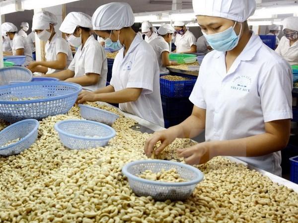 Le Vietnam, premier exportateur mondial de noix de cajou pour la 8e annee consecutive hinh anh 1